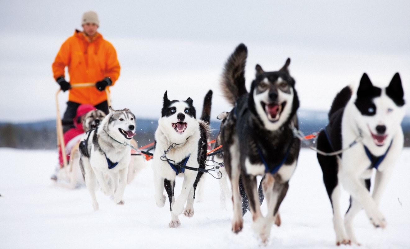Try Husky Safari. Photo: Mikko Ryhänen / Visit Finland