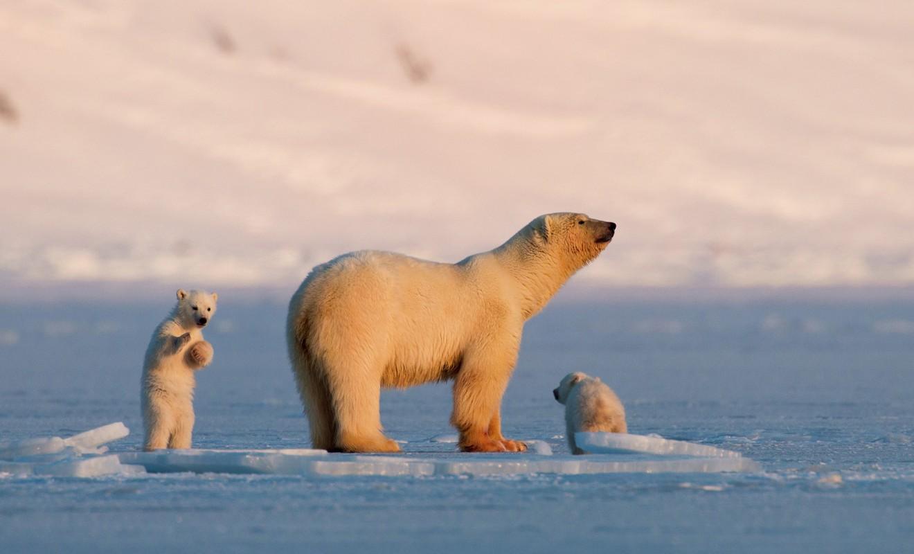 True wildlife in Northern Norway. Photo: Asgeir Helgestad/Artic Light AS/visitnorway.com